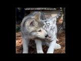 «Картинки и статусы.» под музыку Катя Нова - Волк-Одиночка. Picrolla